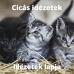 Cicás idézetek, macskás idézetek